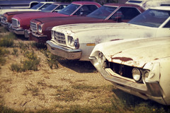 A Roundup of Rancheros on Route 66 between Afton and Miami, Oklahoma (eoscatchlight) Tags: ford route66 junk junkyard roadsideamerica ranchero onone junkers fordranchero wreckingyard