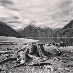 (everkamp) Tags: lake monochrome square washington reservoir willow squareformat stumps mtrose lakecushman olympicmountains olympicnationalforest skokomishriver iphoneography instagramapp uploaded:by=instagram foursquare:venue=4e581dc6aeb7eff130d5f8d2