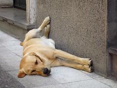 Que vida! (Joan Vifara) Tags: perros calles