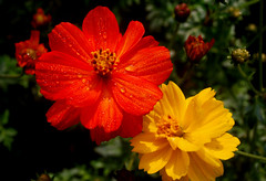 (robin_cic) Tags: flower gettyimages incrediblebengalgettyimagesbangladeshq2 gettyimagesbangladeshq12012