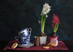 This Breath Between Us (panga_ua) Tags: life china light stilllife art love cookies composition canon spectacular artwork energy artistic availablelight napkin ukraine poetic explore creation imagination natalie flowing breathe pulse chiaroscuro passageoftime arrangement doily tabletop hyacinth regenerate saucers bodegon naturemorte panga sentiments artisticphotography hyacinthus pinkflowers rivne whiteflowers naturamorta artphotography pottedflowers sharpfocus explored blueteacups woodentabletop hyacinthbulbs metallicglasses  nataliepanga pastelsbackground thisbreathbetweenus