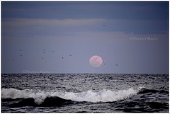 Entre la Luna Llena y yo. (Mario Navarro E) Tags: beach de mar agua nikon playa luna murcia cielo nubes olas gaviotas regin llena guilas d3100