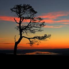 Sunrise silhouette (Gavin MacRae) Tags: winter tree silhouette sunrise dawn scotland twilight nikon glenaffric inverness daybreak lonelytree kessockbridge pinussylvestris scotspine beaulyfirth scottishlandscape highlandsofscotland glencannich scottishnature strathglass glenstrathfarrar highlandlandscape highlandwildlife highlandnature