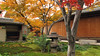 黄梅院 Ōbai-in (ɑlɑstɑr ó clɑonɑ́ın) Tags: autumn japan temple maple kyoto momiji 京都 日本 紅葉 japon giappone japón daitokuji 大徳寺 oubaiin 黄梅院 obaiin kyo¯to2012 kyōto2012 ōbaiin