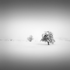 | Catharsis I  in your shadow (Julia-Anna Gospodarou) Tags: trees winter blackandwhite bw white mountain snow nature monochrome square landscape highlights minimal greece zen dreamy serene highkey 2012 snowscape winterscape catharsis metsovo nikond7000 tamron18270pzd juliaannagospodarou blackandwhitefineart negativespace