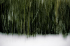 snowy day (abstract) (Steve Stanger) Tags: snow abstract newjersey nj bamboo lightroom d7000 nikond7000 walk50stepsandshoot