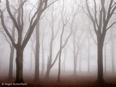Black Plantation (Roger B.) Tags: winter fog woodland unitedkingdom barnsley southyorkshire zd 1122mm