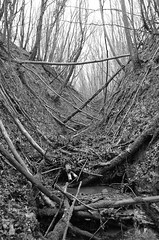UNTOUCHED (simongavin83) Tags: wood trees blackandwhite water woods stream timber valley fallen gorge wooded gulley nikond5100
