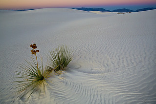 White Sands at Dawn