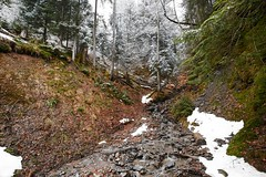 Kirchberg Tirol Marz 2013 24 (Sebastian Feihl) Tags: winter forest nikon d800 landsape captureone march2013 kirchbergtirolaustria