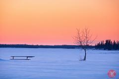 Peaceful moment (Kasia Sokulska (KasiaBasic)) Tags: winter sunset lake snow canada nature beauty evening nationalpark alberta elkisland astotin