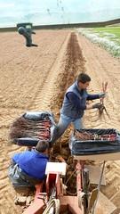 0019VIÑEDOS-plantar-injertos-(22-3-2013)-P1020022 (fotoisiegas) Tags: viticultura viñas viñedos cariñena plantar injertos fotoisiegas lospajeras