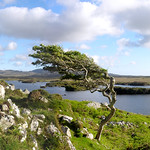 "Wind Swept Tree <a style=""margin-left:10px; font-size:0.8em;"" href=""http://www.flickr.com/photos/89335711@N00/8596738044/"" target=""_blank"">@flickr</a>"