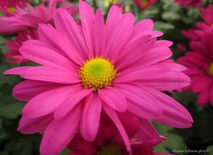 Petalicious! (Lissyanne (fighting pain daily)) Tags: pink flowers macro nature closeup garden petals blossoms perfectpetals mywinners awesomeblossoms amazingdetails unforgettableflowers silveramazingdetails ringexcellence dblringexcellence vigilantphotographersunite vpu2