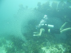 Travis - Key Largo Florida (JCO813) Tags: ocean family water florida scubadiving keylargo minnows