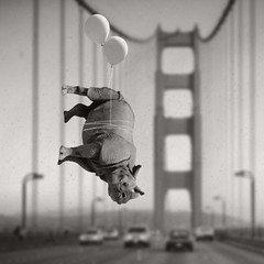 There just wouldn't be enough windshield wiper fluid (Janine Graf) Tags: sf sanfrancisco ca bw silly cars balloons surrealism surreal goldengatebridge rhino surrealist suspensionbridge iphone whiterhinoceros bugsplatter mobilephotography janine1968 janinegraf iwonderifeddieredmaynesunburnseasily