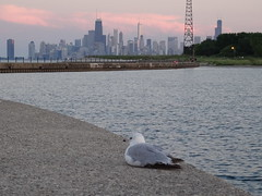 Skyline (hgendreau57) Tags: chicago gull cityskyline