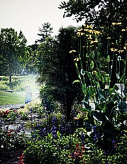 It's For Joy 7/23/16 (dianecordell) Tags: garden joy july summer sprinkler child flowers hoveypondpark queensburyny quotes water nature