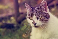 Micia (Eleonora Cacciari) Tags: micia gatta gatto gattino gattina kitty kitten micio eye occhi di occhidigatto eos1200d eleonoracacciari emiliaromagna ecacciari efs eos reflex canon canoneos1200d canonefs18135mmf3556isstm colori baffi baffidigatto nasino animale animal animaletto peloso pelosino