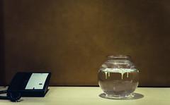 [359] - interior spaces (2) (jathdreams) Tags: amritsar radissonblu hotel hotelradissonblu india northindia incredibleindia interior interiordecor cinematic 50mm 50mmf14d travel travelphotography vintage grunge warm mellow nikon nikond5100 project365 objects stilllife