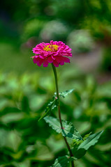 colorful (kderricotte) Tags: helios44m458mmf2 bokeh depthoffield flower plant outdoor sonya6000