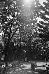 160701002Ilford_Pan_400_35Ti_-1 (Emptiless) Tags: ilford pan 400 blackwhite bw blackandwhite nikon 35ti taiwan taipei ntu nationaltaiwanuniversity tree       campus compactcamera analog analogue film