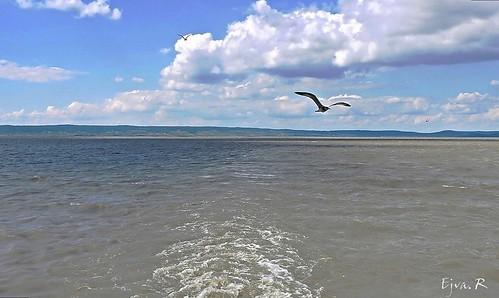 Summer Boating Lake Tó Nyár Hajózás