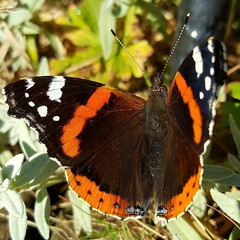 butterfly (space_child) Tags: simplybeautiful macro macrophoto macromagic macromoments macromood sunnyday summerwalks