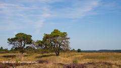 DSC06078.jpg (ChrMous) Tags: landschap veluwe tamronsp2470mmf28divcusd heide categorie landschapvzw nationaalparkhogeveluwe nederland landscape