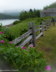 A Foggy View   ... #Happy Fence Friday (maureen.elliott) Tags: foggy mist fence photographer view bicnationalpark quebec nature scenery outdoors happyfencefriday