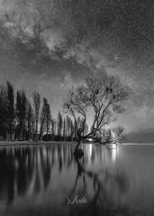The Lone Tree  BW (Mikey Mack) Tags: wanaka otago newzealand nz