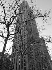 Challenge (vittorio vida) Tags: tree skyscraper ny newyork manhattan usa travel building city urban bn bw