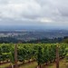 Taking in View Across the Willamette Valley