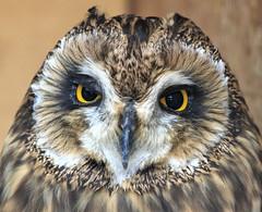 Mirada (vic_206) Tags: bird canoneos7d canon300f4lis bokeh mirada ojos eyes