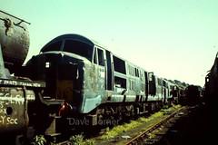 D601 Barry 1979 (The Great Innuendo) Tags: british rail diesel hydraulic barry island scrapyard western br