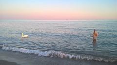 The swan at the beach (marck wells) Tags: caorle nicegirl swan cigno