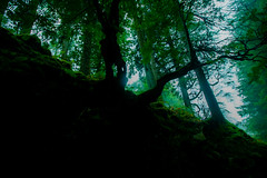 Dark and Green (Costigano) Tags: dark darkness woods woodland green trees nature outdoor ireland irish canon eos wicklow forest tree