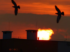 sunset with birds (Ryuu) Tags: sunset settingsun birds flying pigeons building roof chimneys silhouettes sun downing sundown sunny sky red skyscape orange clouds urban nature flight lines cables dark silhouette animals sunlight warmtones skyline composition perspective zoom light fz200 fiery cloud wings doves architecture