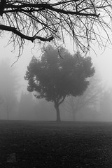 "37/365 ""The Unseen"" (K3Z Photos) Tags: park camera morning winter bw white black cold tree nature bike fog canon lens smog moving shot freezing dslr panning schwin finegold flickraward 50mmtakumarf14 manualfocs"