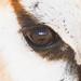 The World As Seen Through The Eyes Of A Springbok