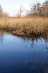 DSC00509 (diervilla) Tags: winter reflection water sony 1855mm askhambog yorkshirewildlifetrust slta37