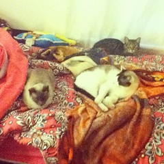 Cats on my bed