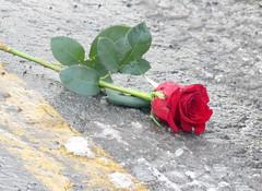 The day after (Joann Egar) Tags: redrose slush lendemain dayaftervalentinesday winnersparkinglot