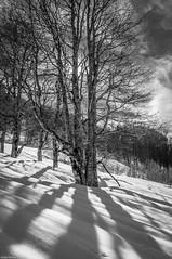 Iraty. (Jérôme Cousin) Tags: trees shadow bw white snow black tree monochrome nikon noir nb ombre 64 arbres neige monochrom nikkor et arbre pays blanc basque col euskadi pyrenees 18105 euskal herria atlantiques herri iraty d5000