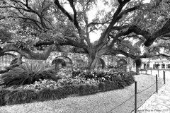 Alamo Grounds II (ICTUS Photography) Tags: trees bw gardens sanantonio blackwhite nikon texas alamo lawns thealamo elalamo ictus explored nikond7000 texastowns ictusphotography ricardoruizdeporras