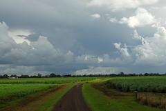 Sugar and soy (dustaway) Tags: light clouds landscape australia nsw dirtroad agriculture australianlandscape cloudscape soybeans sugarcane gravelroad ruralaustralia northernrivers rurallandscape sunlightthroughclouds richmondvalley australianweather richmondriverfloodplains