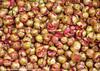 "!!ا"" سے انار۔۔۔۔"" (Bashir Osman) Tags: pakistan fruit pomegranate fruta granada karachi grenade frutta romã sindh paquistão obst nar باكستان bashir 石榴 انار 巴基斯坦 vrugte ザクロ meyve φρούτο granatapfel melagrana پاکستان travelpakistan 파키스탄 pakistán фрукты гранат фрукт میوه کراچی パキスタン فاكهة अनार رمان ρόδι ثمر ثمرة пакистан fructum карачи bashirosman gettyimagesmiddleeast كراتشي καράτσι કરાચી कराची aboutpakistan aboutkarachi travelkarachi પાકિસ્તાન পাকিস্তান pakistāna pakistanas ફળ granaatjie রক্তবীজ દાડમ bashirusman"