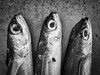 Three in a Row (beancaker) Tags: bw fish nik siverefex