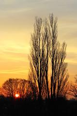 Sunrise  [EXPLORE] (Hetty S.) Tags: trees red sky orange sun nature colors yellow sunrise canon ngc canoneos