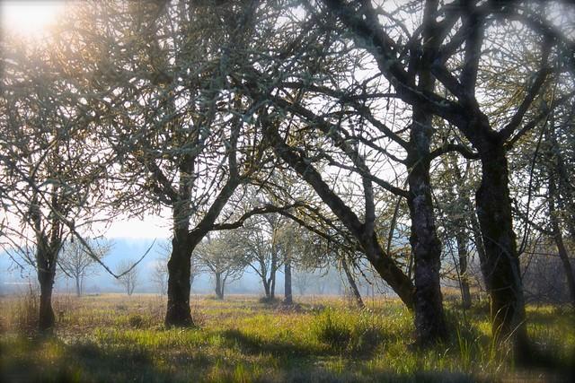 Wetland Meadow at Jackson/Frasier